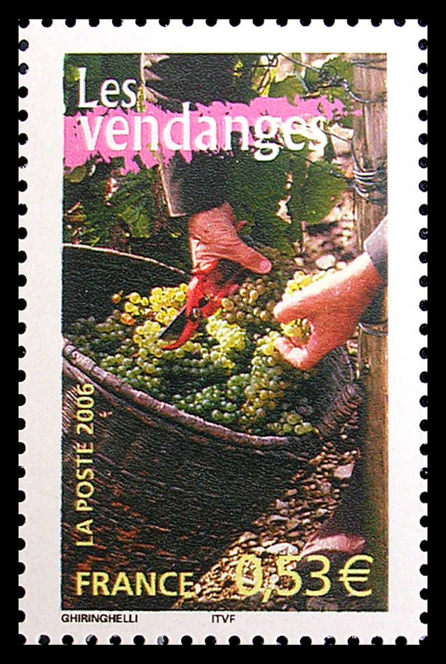 Les vendanges - France - 2006